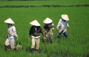 베트남, 서서히 내딛는 민주화의 걸음